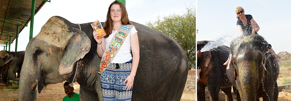 Elephants_Cookies