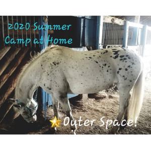 Camp St Albans Horse